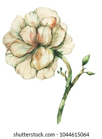 watercolour flower picture. Flower print. Design interior picture.