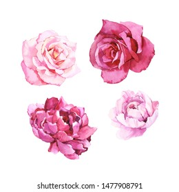 Watercolour hand painted botanical gentle peony and rose flowers illustration set isolated on white background