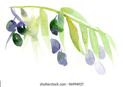 watercolour handmade tender olive branch illustration