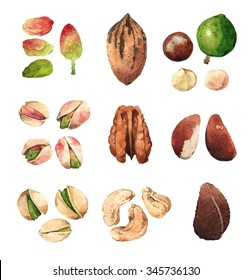 Watercolour highly detailed clip art illustrations of nuts: pistachio, cashew, pecan, macadamia and Brazil nut