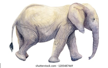 Watercolour illustration of an elephant