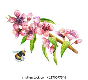 Watercolour illustration of peach/nectarine/cherry branch with flowers, leaves and bumblebee.