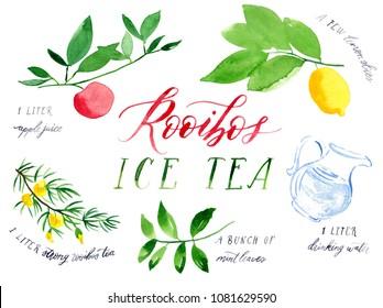 Watercolour Illustration of Rooibos Ice Tea Recipe