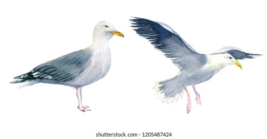 Watercolour illustration of a seagull