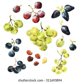 Watercolour illustrations of delicious grape berries