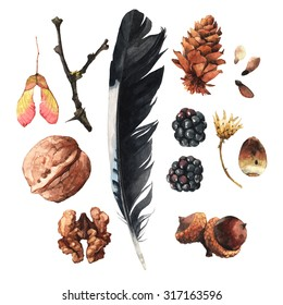 Watercolour illustrations with walnuts, berries, acorns and other forest items