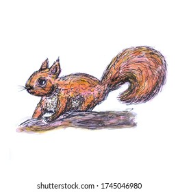 A Watercolour and Ink Sketch of a Red Squirrel on White Background