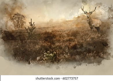 Watercolour painting of Beautiful forest landscape of foggy misty forest in Autumn Fall with beautiful red deer stag
