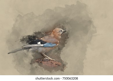 Watercolour painting of Beautiful Jay bird Garrulus Glandarius on tree stump in woodland landscape setting