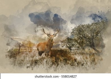 Watercolour painting of Beautiful red deer stag in countryside landscape scene looking out into distance concept image