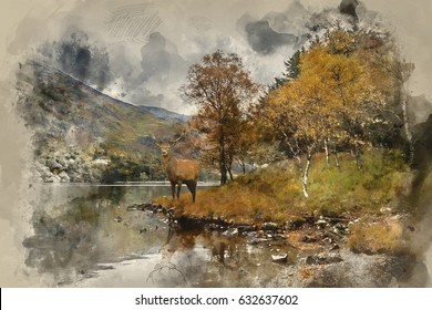 Watercolour painting of Beautiful red deer stag looks out across lake towards mountain landscape in Autumn scene