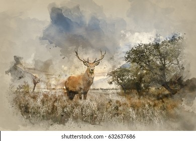 80b496e36 watercolor red animal · deer nature. Watercolour painting of Beautiful red  deer stag in countryside landscape scene looking out into distance concept