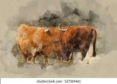 Watercolour painting of Beautiful Scottish Highland Cattle grazing in field