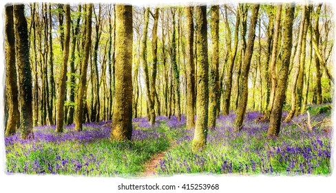A watercolour painting of beautiful spring bluebell woods near Redruth in Cornwall