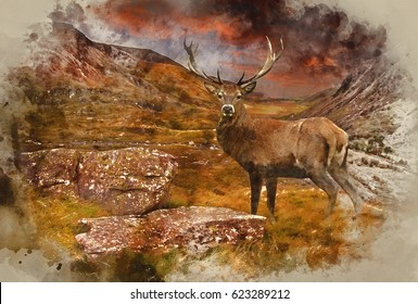 Watercolour painting of Dramatic sunset with beautiful sky over mountain range giving a strong moody landscape and red deer stag looking strong and proud