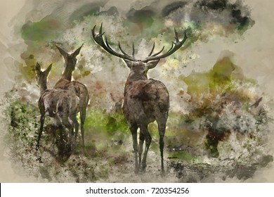 Watercolour painting of Family group herd of red deer stag cervus elaphus during rut season in forest landscape during Autumn Fall
