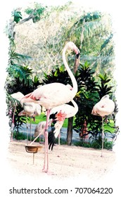 Watercolour Painting of Flamingo in the nature.