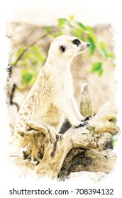 Watercolour Painting of Meerkat in the park.