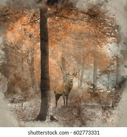 Watercolour painting of Stunning image of red deer stag in foggy Autumn colorful forest landscape image