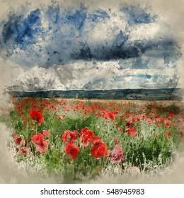 Watercolour painting of Stunning poppy field landscape in Summer sunset light