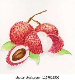 Watercolour sketch of a Lychee fruit