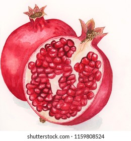 Watercolour sketch of Pomegranate Fruit