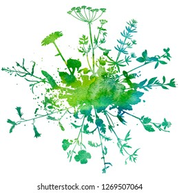 Watercoolor green background with silhouette of wild plants, herbs and flowers, botanical illustration, natural floral template