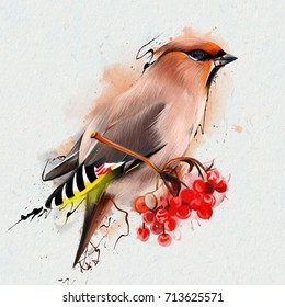 The Waxwing, common Waxwing, or (lat. Bombycilla garrulus) is a songbird of passerine. Closeup on a white background, on the branch of a red ash, with elements of the streaks of paint.