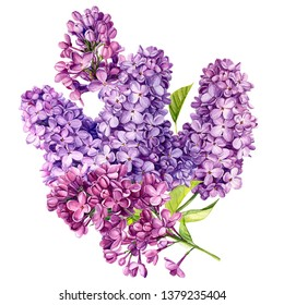 wedding bouquet of lilac flowers on an isolated white background, watercolor illustration, botanical painting, hand drawing