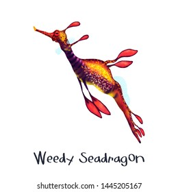 Weedy Seadragon animal realistic illustration