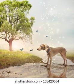 Weimaraner dog and butterflies at a magical brook