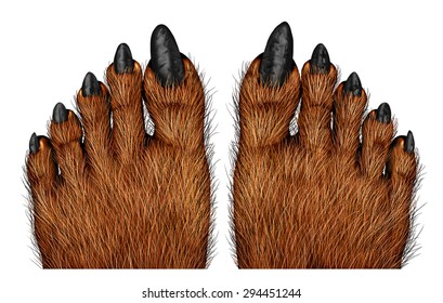 Werewolf feet as a creepy creature for halloween or scary symbol with textured hairy and textured foot skin with cursed wolf monster toes on a white background.