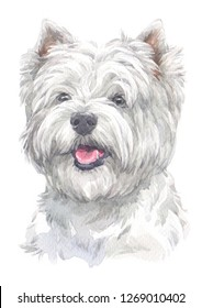 west Highland white Terrier breed dog painting Water colour technique