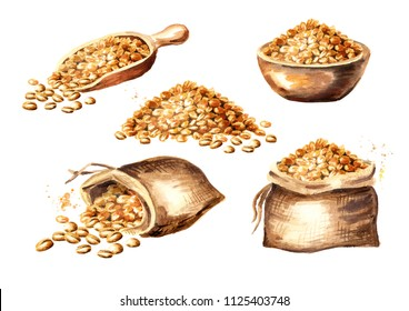 Wheat seeds. Grain set. Watercolor hand drawn illustration, isolated on white background