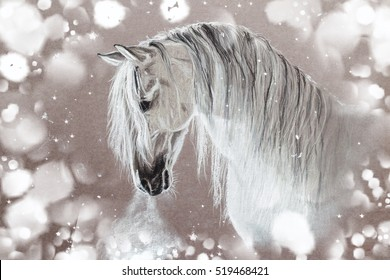 White Andalusian horse in a contrasting light and surrounded by patches of light and snow,with the steam from his nostrils.Winter picture painted pastel monochrome.Magic Christmas and New Year picture