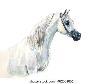 white arabian horse watercolor portrait