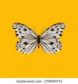 a white butterfly with black dots on the wing on yellow background