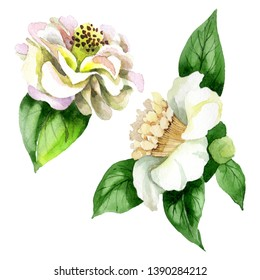 White camelia floral botanical flowers. Wild spring leaf wildflower isolated. Watercolor background set. Watercolour drawing fashion aquarelle. Isolated camelia illustration element.