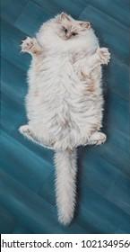 White cat, fluffy cat, oil painting