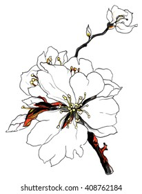 White cherry sakura tropical flower in blossom on a branch. Botanical colorful Illustration for wedding greeting cards, invitations, and other printing projects. Japanese oriental style.