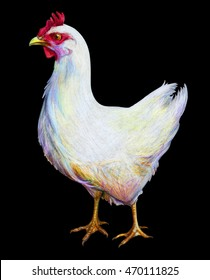 White chicken drawing on black background