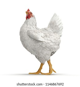 White Chicken or Hen. 3D illustration