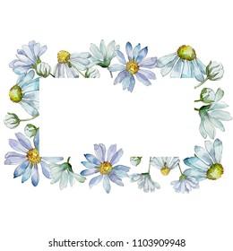 White daisy. Floral botanical flower. Frame border ornament square. Aquarelle wildflower for background, texture, wrapper pattern, frame or border.
