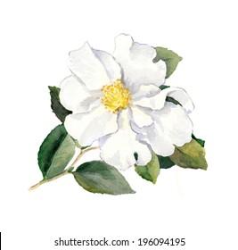 White flower yellow center images stock photos vectors shutterstock white flower watercolor botanical illustration mightylinksfo