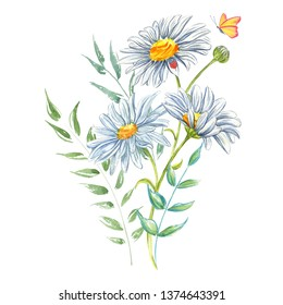 White flowers chamomile watercolor with ladybug and butterfly. Wild botanical garden. Healing herb great for natural cosmetics, aromatherapy, health care products, tea packaging.