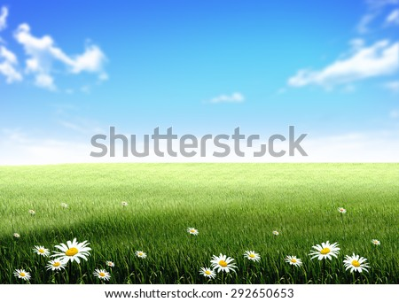 green grass blue sky flowers sky rainbow white flowers green grass hill lawn field over blue sky clouds background white flowers green grass hill lawn stock illustration 292650653