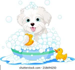 White fluffy dog having a soapy bath. Raster version.