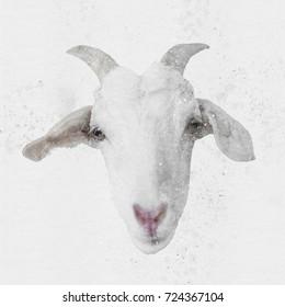 white goat portrait - watercolor on canvas