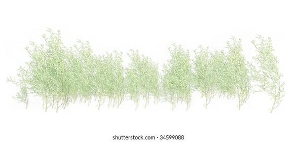 White Grass  foliage on a white background