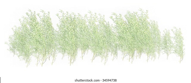 White & green grass  foliage on a white background